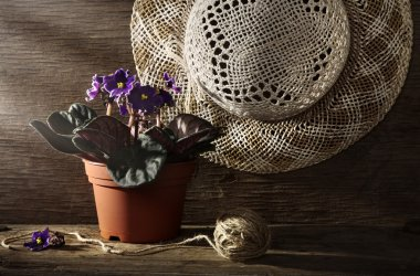 Rural still life with pansy