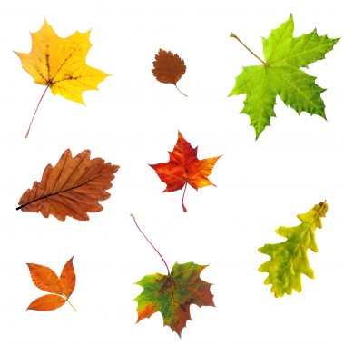 Photo of autumn leave