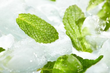 Leaves of mint in ice