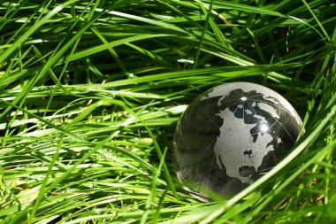 Globe in a grass, ecology