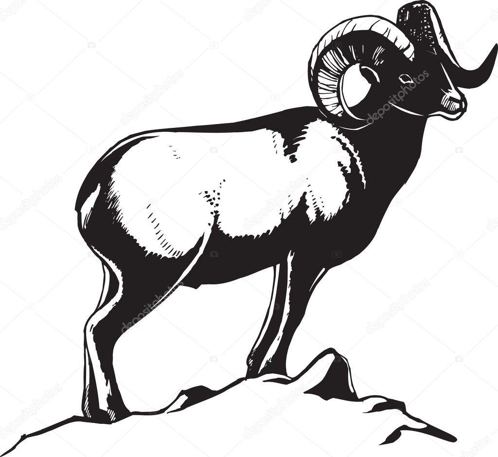 snow ram u2014 stock vector sushkonastya 1866201