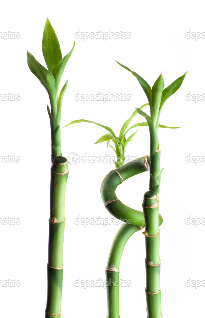 Three bamboos