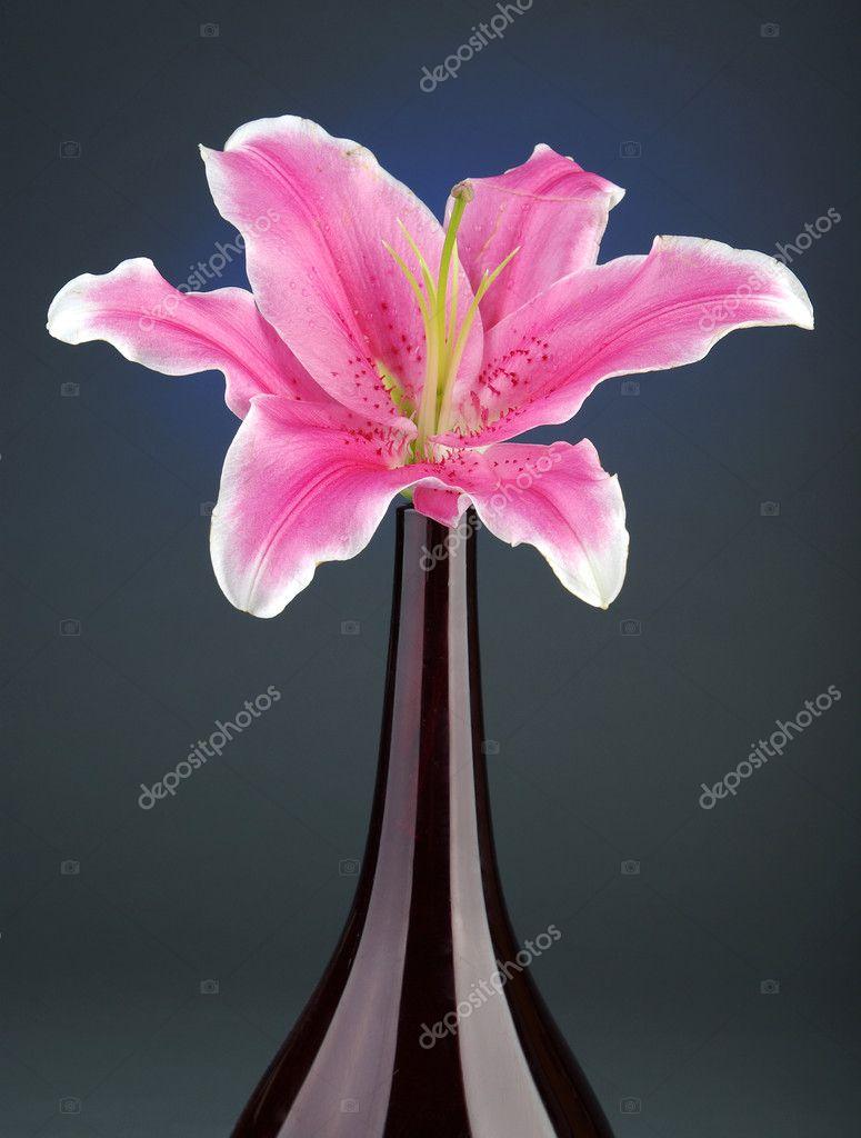 Flor hermosa — Foto de Stock