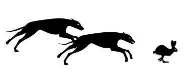 Greyhound hunting hare