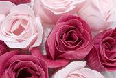 rózsaszín és piros rózsa