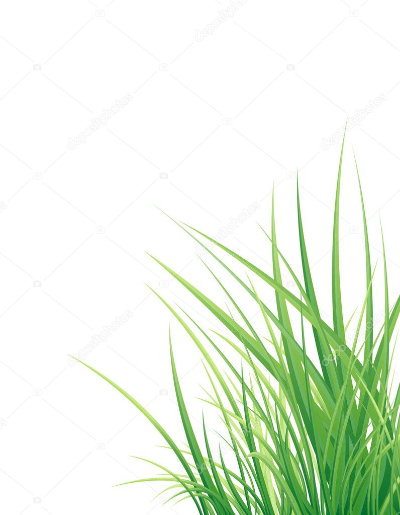 Background with the grass