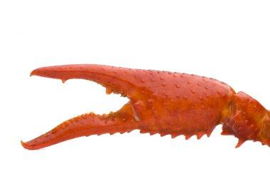 Crawfish claw