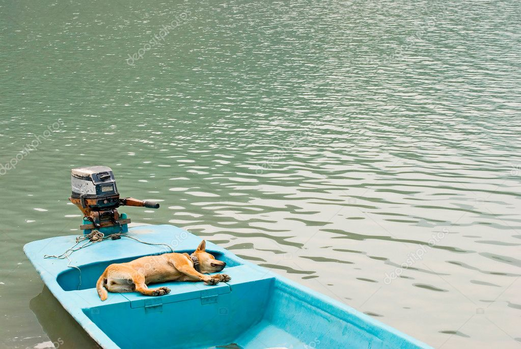 Relaxing dog in vacation on the boat