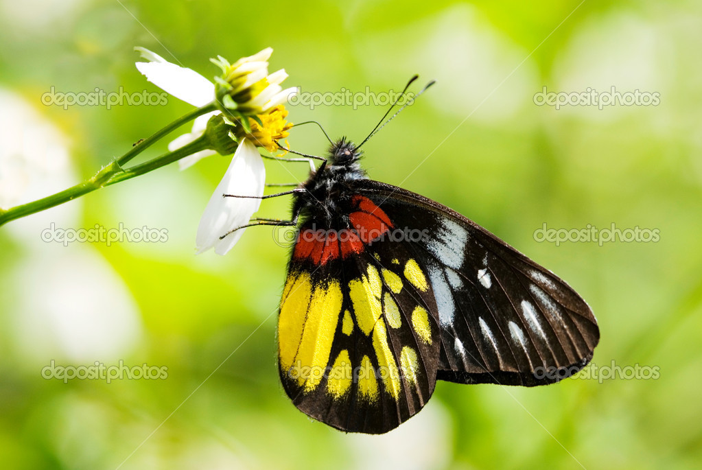 Corlorful Butterfly in red and yellow
