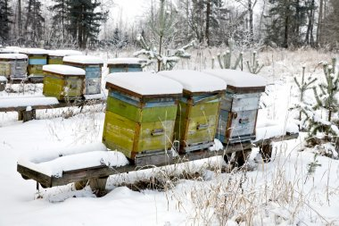 The winter on an apiary