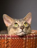 Fotografie Katze sitzt im Haustierbett