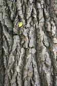Jednokřídlé na kůře stromů