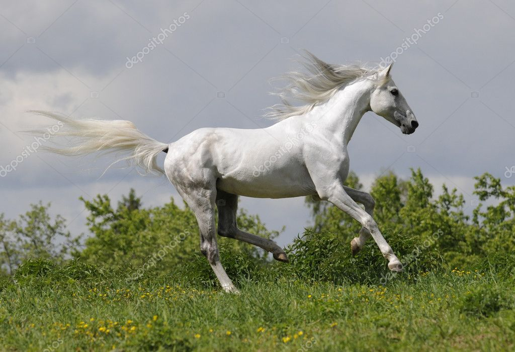 white horse running id - photo #9