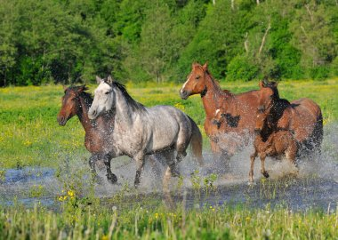Horses run on water