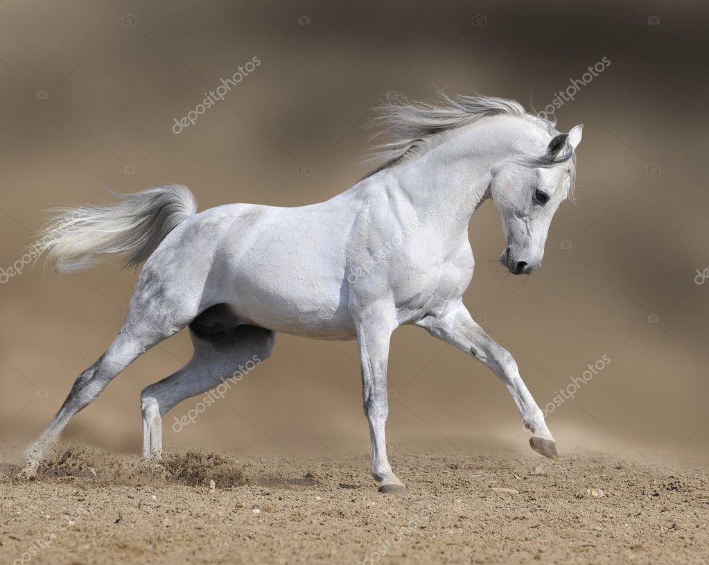 White horse in dust desert