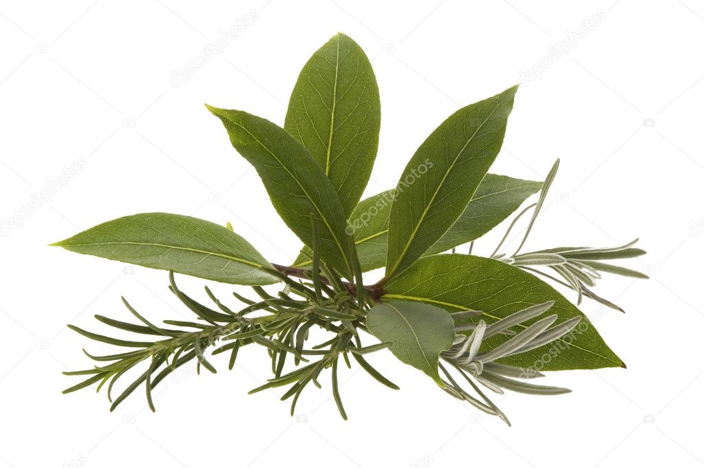 Fresh herbs. rosemary, lavender and bay leaf