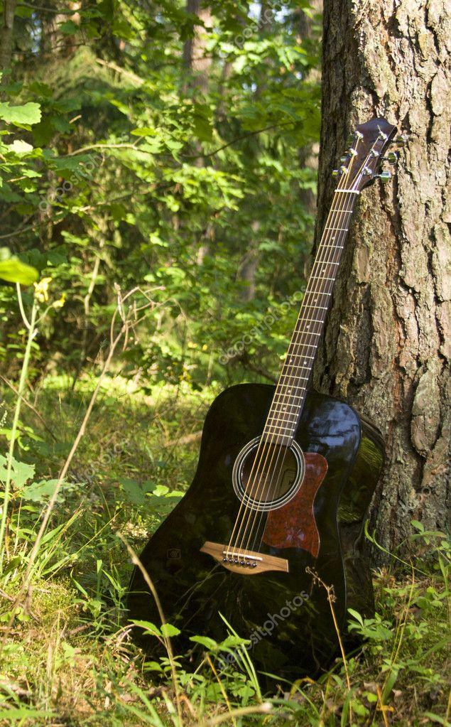 Acoustic guitar in the forest