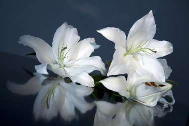 White bloom lily