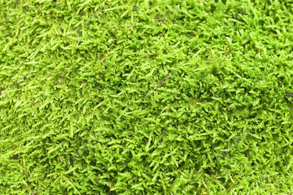 Green Moss backgound