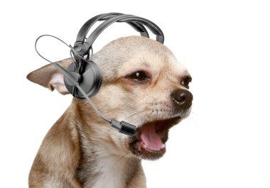 Chihuahua telephone operator
