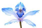 Fényképek kék tavasz