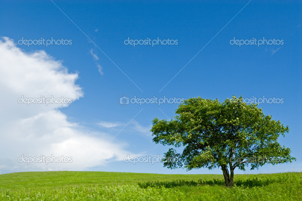 Lonely tree - oak