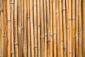 Fotografie Bambus-Wand