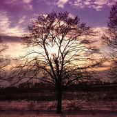 naplemente és fa