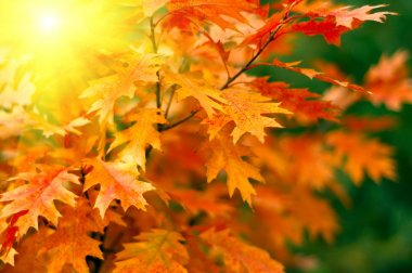Red autumn leaves background