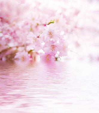 """Картина, постер, плакат, фотообои """"весенний вишневый цвет"""", артикул 1719902"""