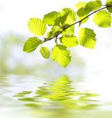 Blätter im Wasser reflektiert