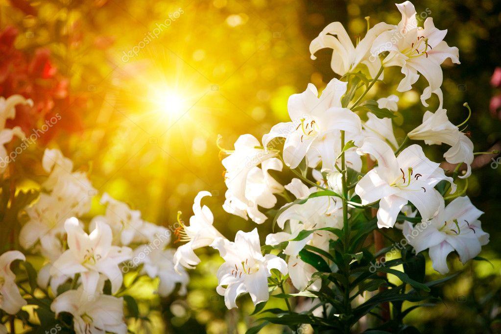 Speing flower with sunbeam