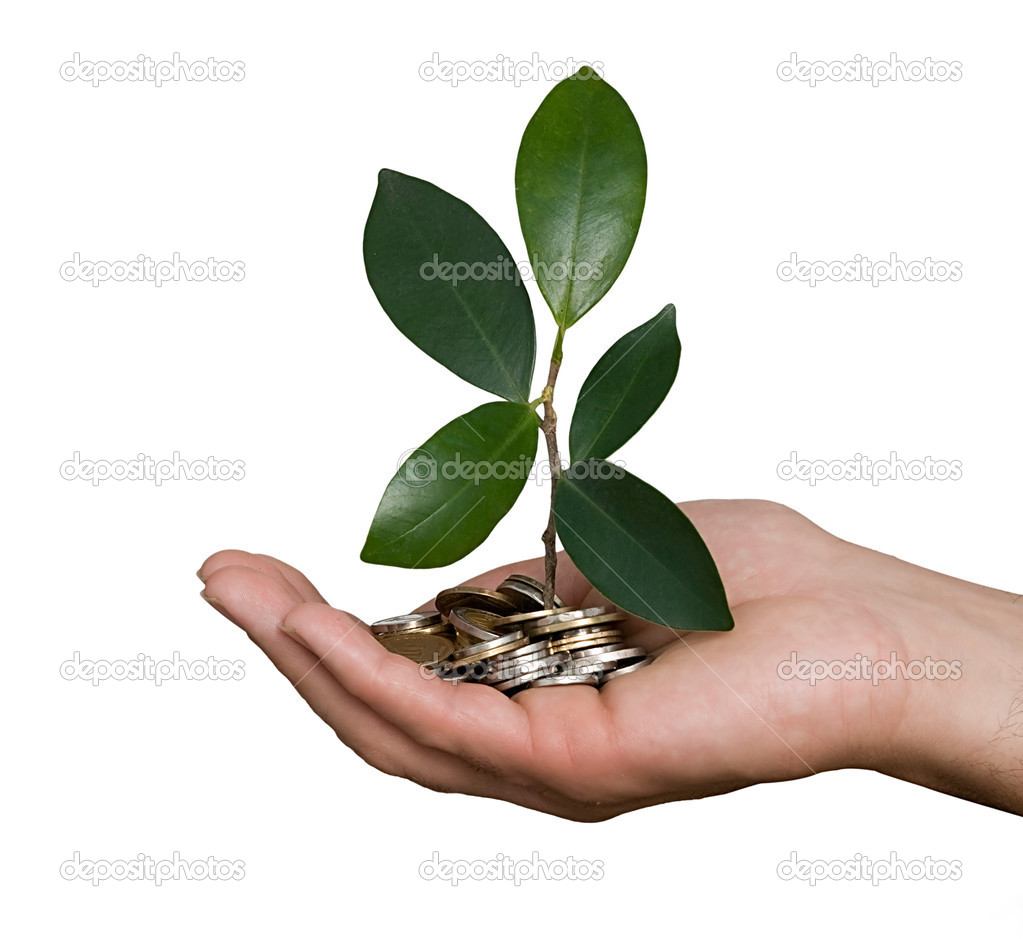 Palm with tree growng from pile of coins