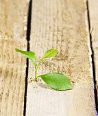 Small plant on floor