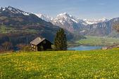 Alpská louka na jaře