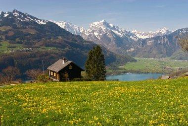 Alpine meadow in spring
