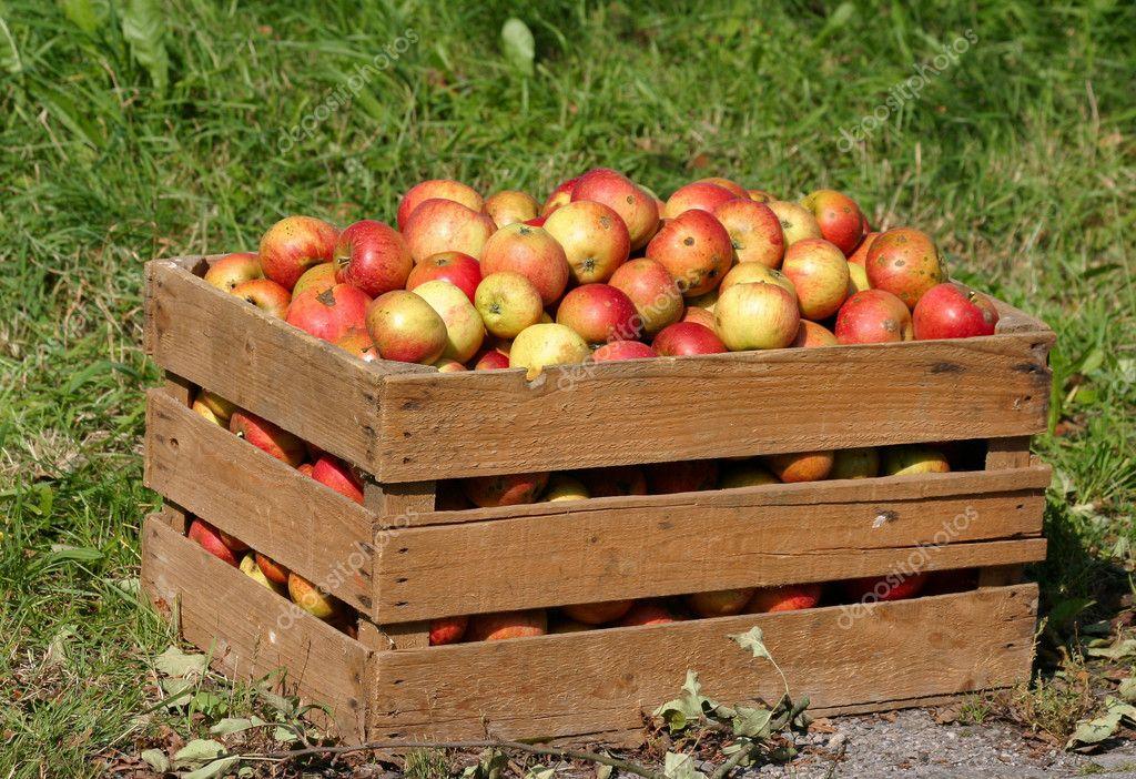 просто ящики яблок картинки эксперты спешат