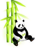 Fotografia bambù e panda