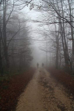 Two man walking the country road in fog