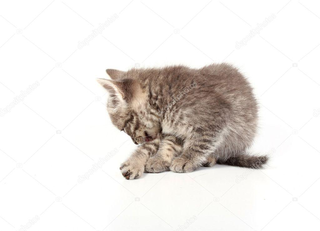 pussu γλείψιμο φωτογραφίες
