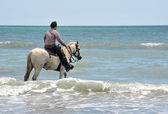 Man and horse in sea