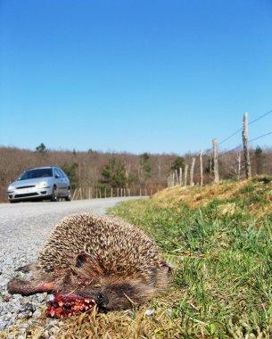 Mortality - road kill