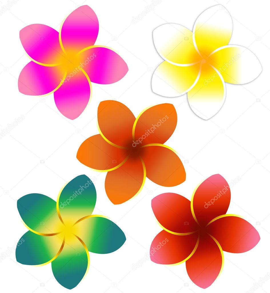 Five Colorful Plumeria Flowers