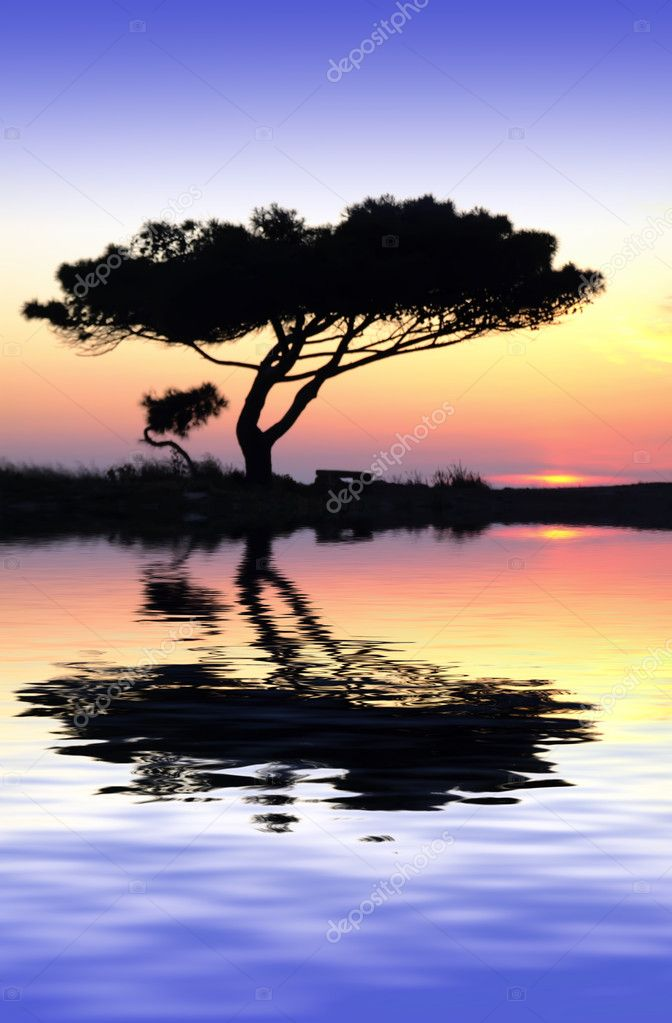 Tranquility at Water's Edge