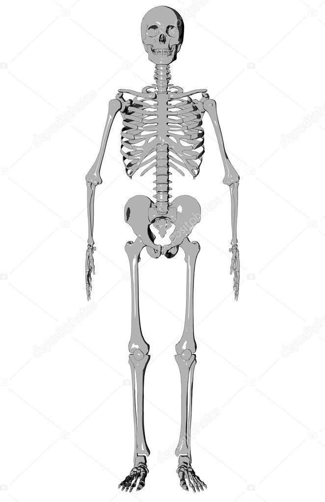 esqueleto - bosquejo — Fotos de Stock © dnavarrojr #1849309
