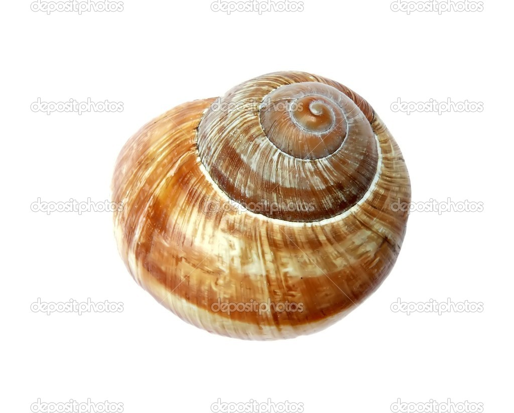 how to clean escargot shells
