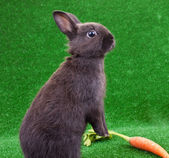 Funny rabbit and carrot
