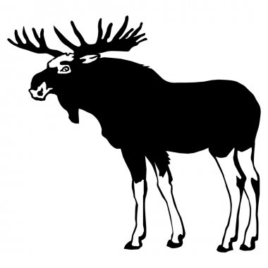 Moose isolated silhouette