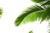 Listy palmy