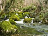 cade il piccolo torrente di montagna